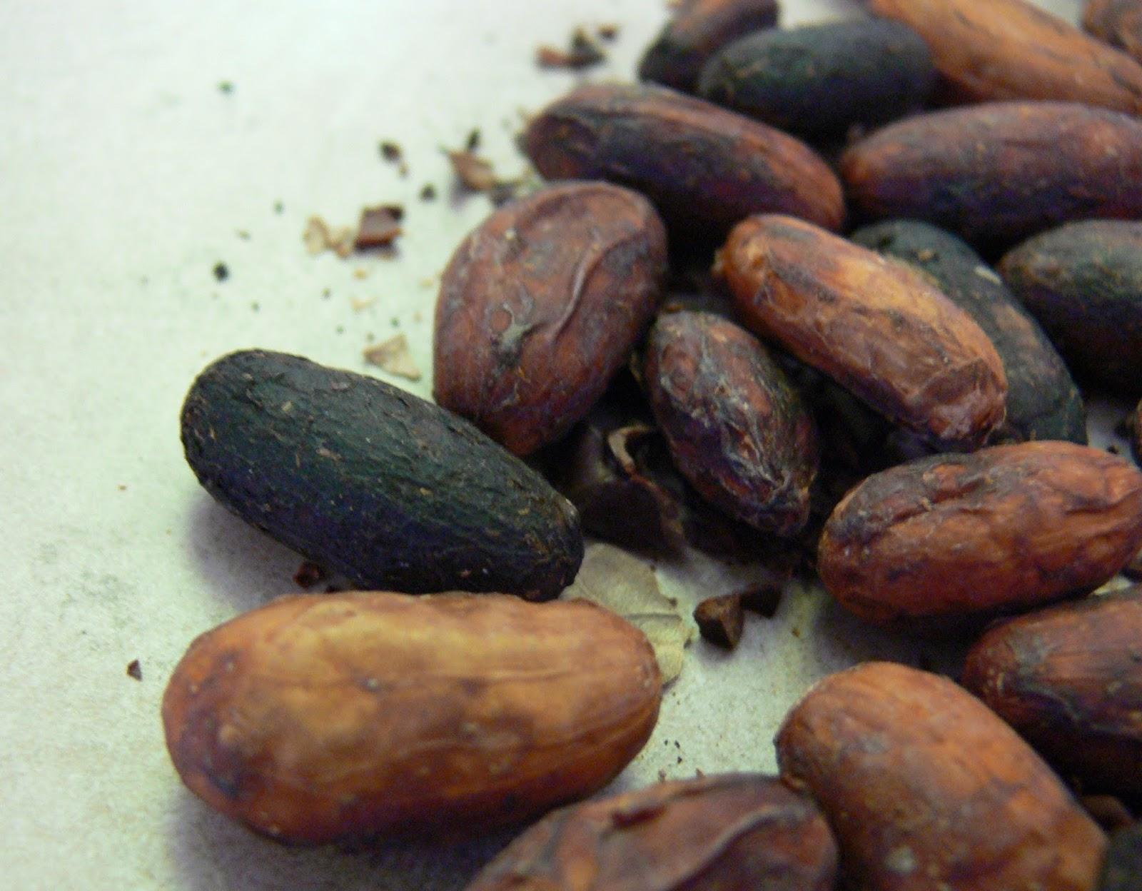 How to grow organic cocoa in Brazil 24Warez.Ru 70