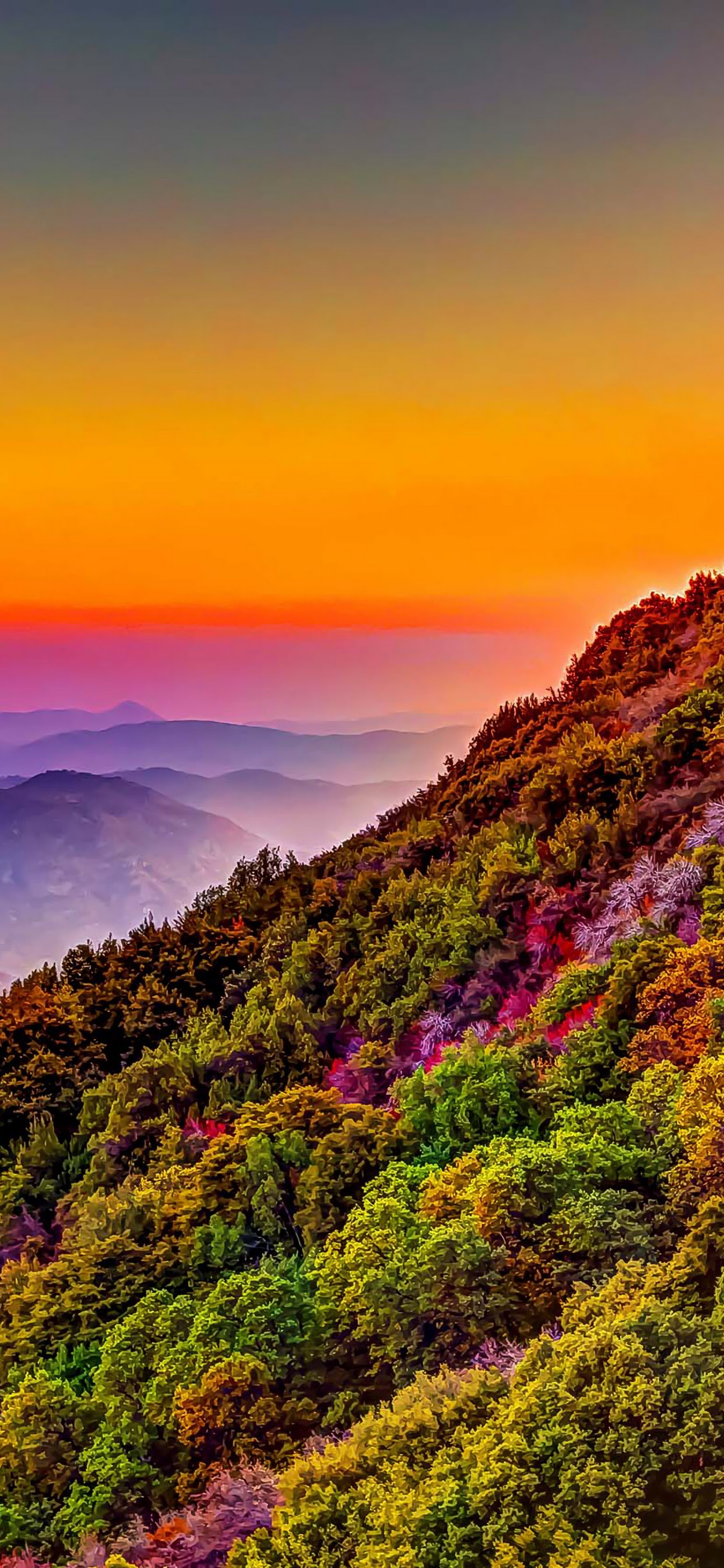 mountain colorful forest nature sunset