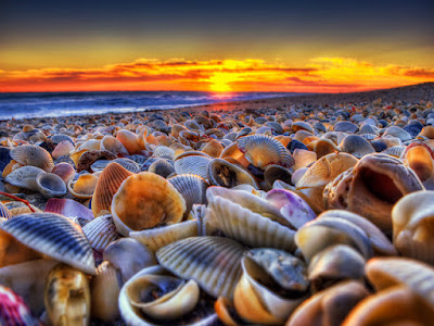 Playa de las conchas - Bahía del Tiburón