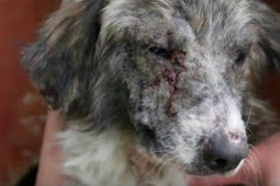 Street Dog Who Overcame Incredible Odds Is Still Waiting For A Home
