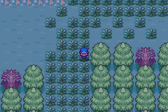 pokemon wish screenshot 4