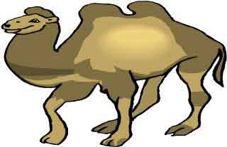 El camello bailarín
