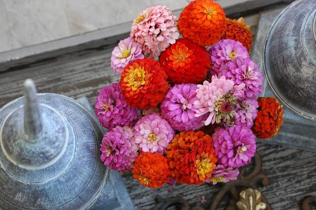 zinnias-garden-vignette-jemma