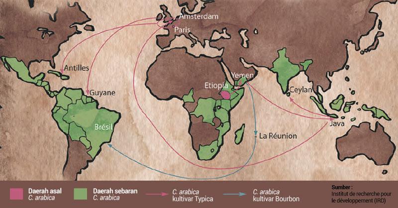 Sejarah kopi biji kopi tanaman kopi dna manis