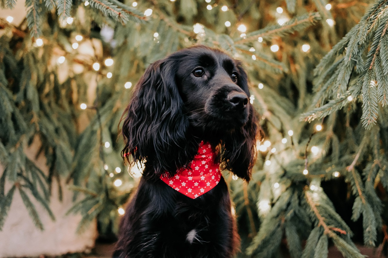 Winter and Christmas Essentials for Dog Owners