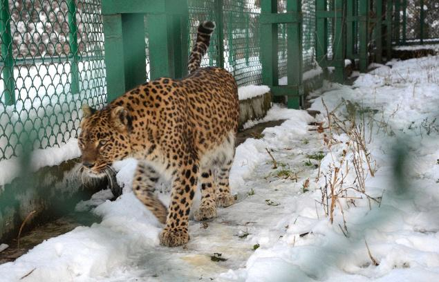 Dachingam Wildlife Sanctuary