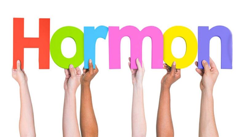 Hasil gambar untuk hormon