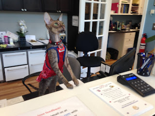 Kely the Cornish Rex cat at the front desk