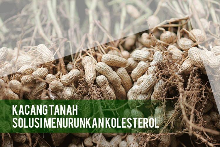 Khasiat Kacang Tanah Untuk Menurunkan Kadar Kolesterol