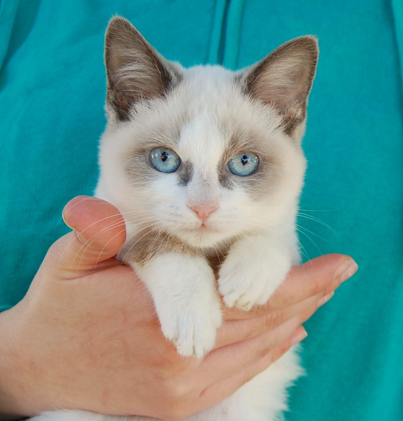 atomic kitten natasha hamilton