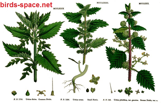 القراص الكبير أو الشائك (Urtica dioica) وينتشر في بلاد الشام و معظم البلدان الأسيوية و ينمو في الحقول . القراص الصغير أو الحارق (Urtica urens) وينتشر في الوطن العربي ومعظم مناطق العالم و شمال إفريقيا و ينمو في الأماكن الغنية بالذبال و يمتاز بشعيرات لاسعة و أوراق خضراء داكنة مثلثة اللون . القراص الروماني أو الكاوي (Urtica pilulifera) وينتشر في مناطق أوربا وخصوصا جنوبها.