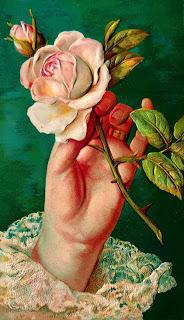 flower rose floral background printable digital download image botanical art