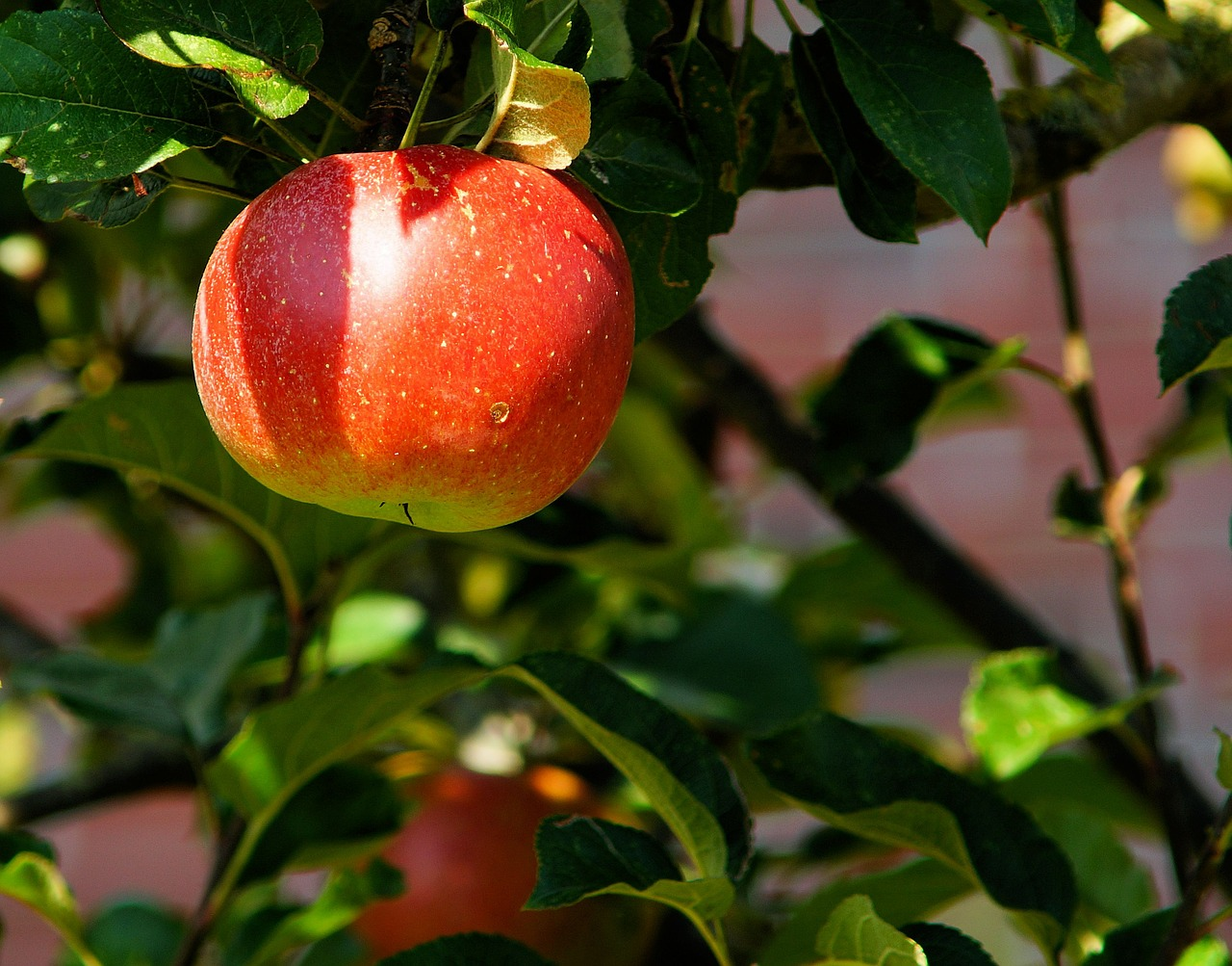 jenis buah-buahan yang baik untuk diet