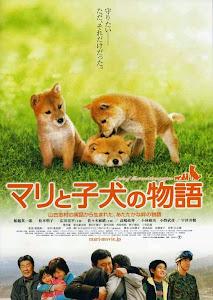 Câu chuyện về Mari và 3 chú cún nhỏ