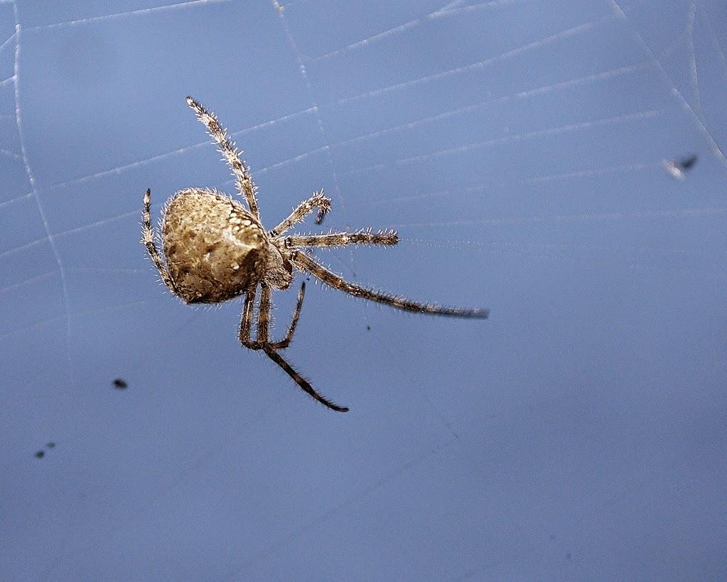 Eureka Mountain Life Barn Spider Season