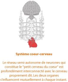 L'organe ici n'est pas employé dans le sens biologique ou physique du terme comme pompe mécanique, qui fournit l'oxygène et les nutriments du sang. Mais, comme définition émotionnelle, distinction entre le corps et l'esprit.