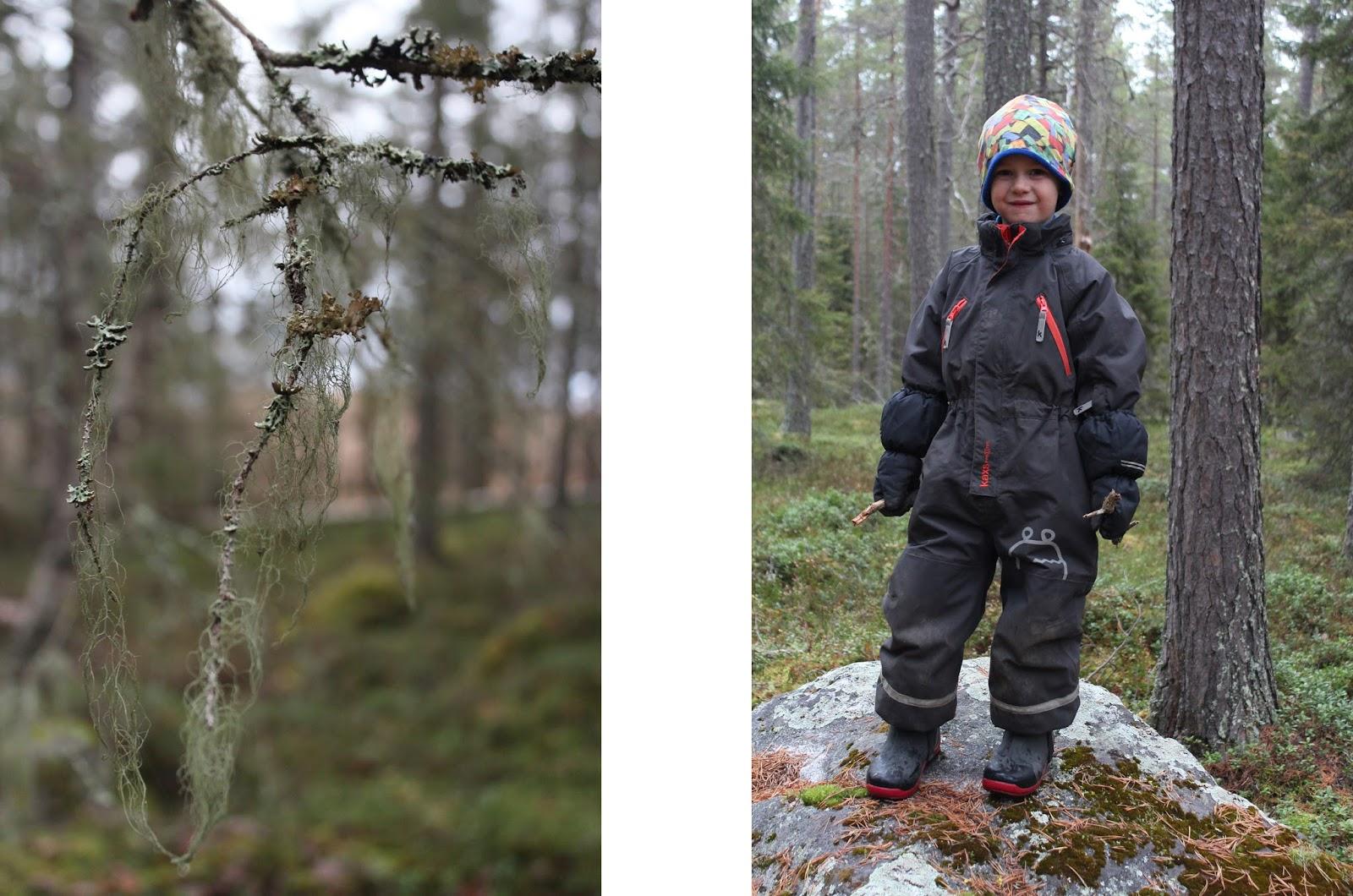 En vildvuxen skog av antenner