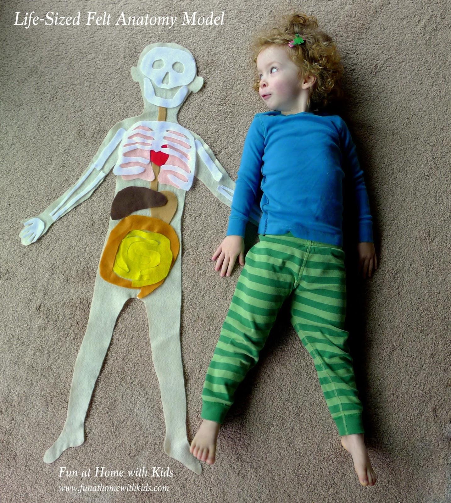 Life Sized Felt Anatomy Model