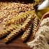 Mitos e verdades sobre o trigo