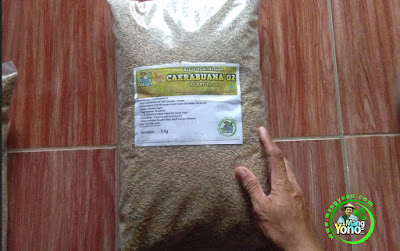 SRIYATNO Wonogiri, Jateng   Pembeli Benih Padi CAKRABUANA 02 (CB02) 90 HST Panen  10 Kg atau 2 Bungkus.