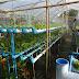 สวนผักคอนโด เกษตรกรรมของคนเมือง ตอบโจทย์คนมีพื้นที่น้อยแต่อยากทำเกษตร