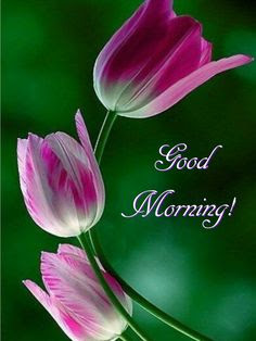 Good Morning Wish Image