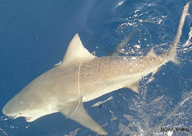 8 Separate Florida Shark Attacks In Under 2 Weeks