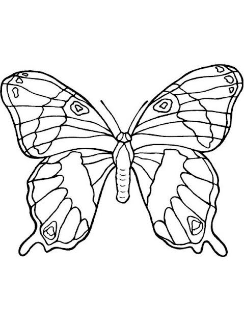 farfalla, animali,