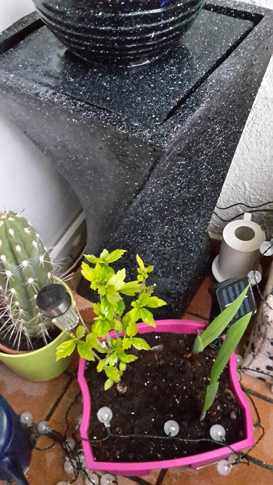 Mona 39 s blog blumfeldt sch nbrunn standbrunnen zimmerbrunnen solar kugel springbrunnen f r - Wohnzimmer brunnen ...