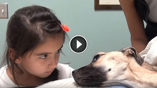She Looks Into The Eyes Of A Dying Puppy. What Happens Seconds Later Is A Miracle!