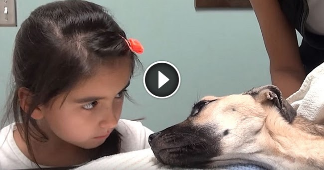 Dog Stares At Owner After Making Noise Video