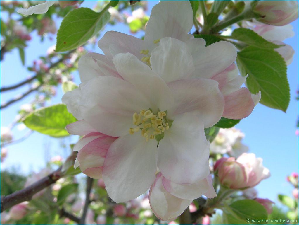 Adquiere Aqui Estos Fondos De Pantalla Con Flores Hermosas: ***FLORES DEL MUNDO***: BELLOS FONDOS DE FLORES EXOTICAS