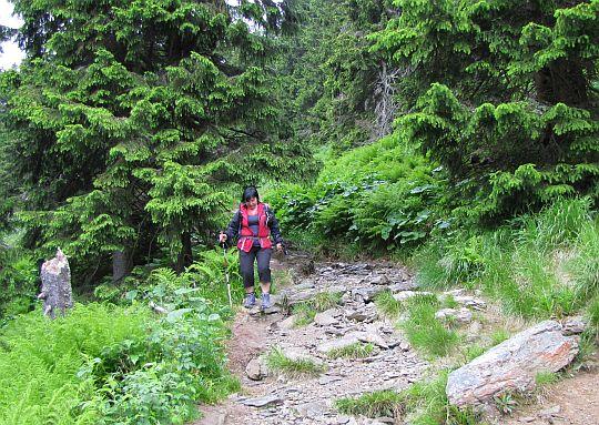 Początkowy odcinek zejścia do doliny Białej Opawy.