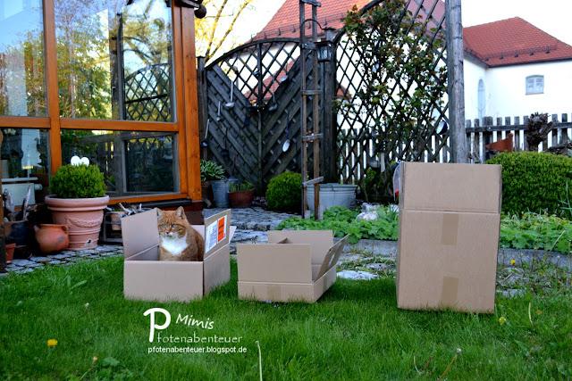 Katze Mimi sitzt in einem von drei Kartons