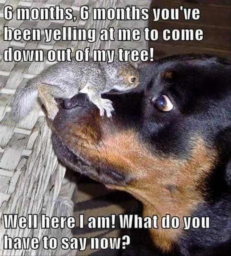 30 Funny animal captions - part 54, funny caption pictures, animal pictures with sayings