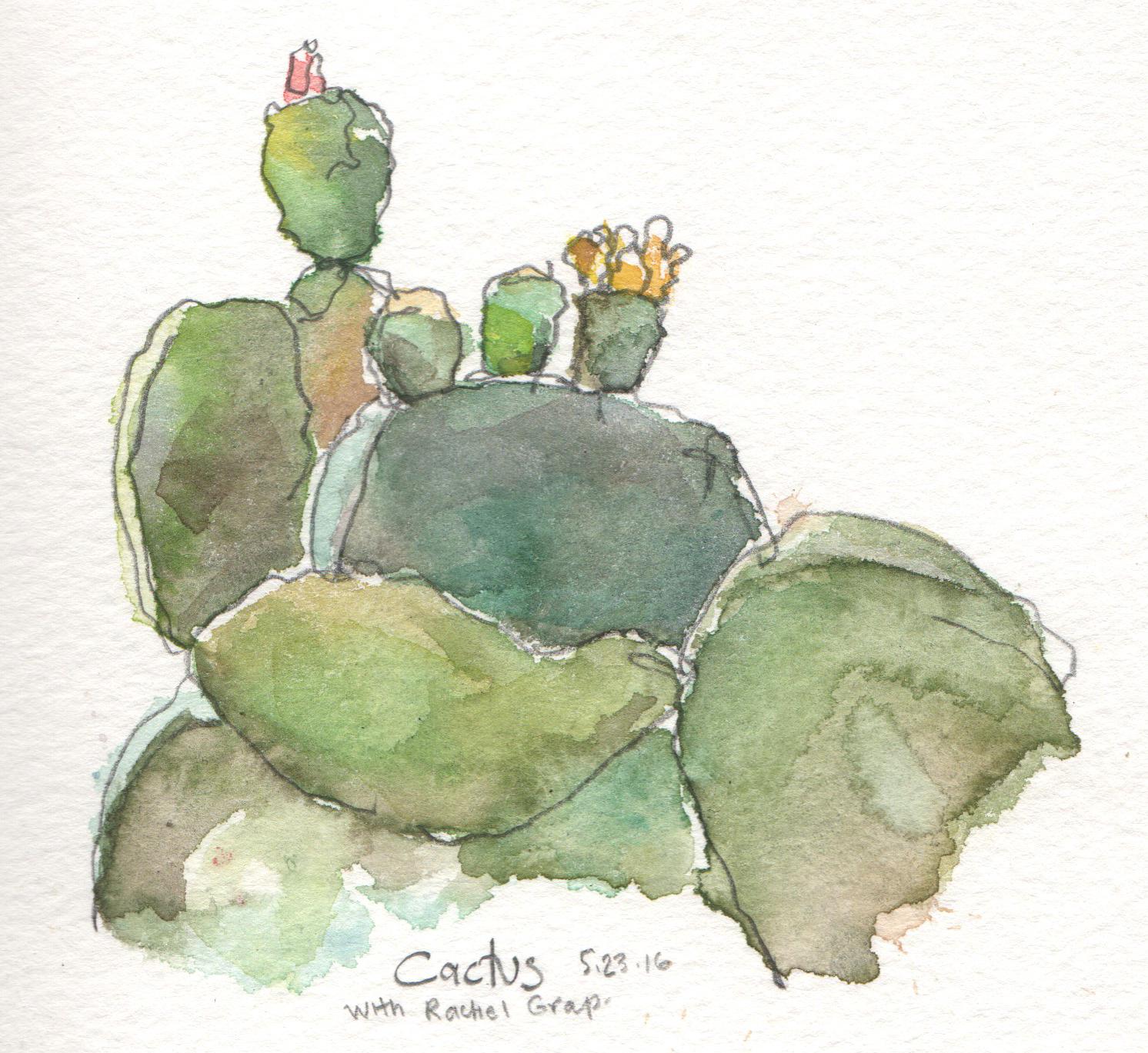 Old Cactus Garden, Balboa Park, San Diego | Urban Sketchers