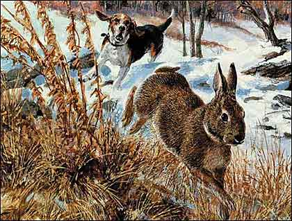 Beagle hunting - photo#37