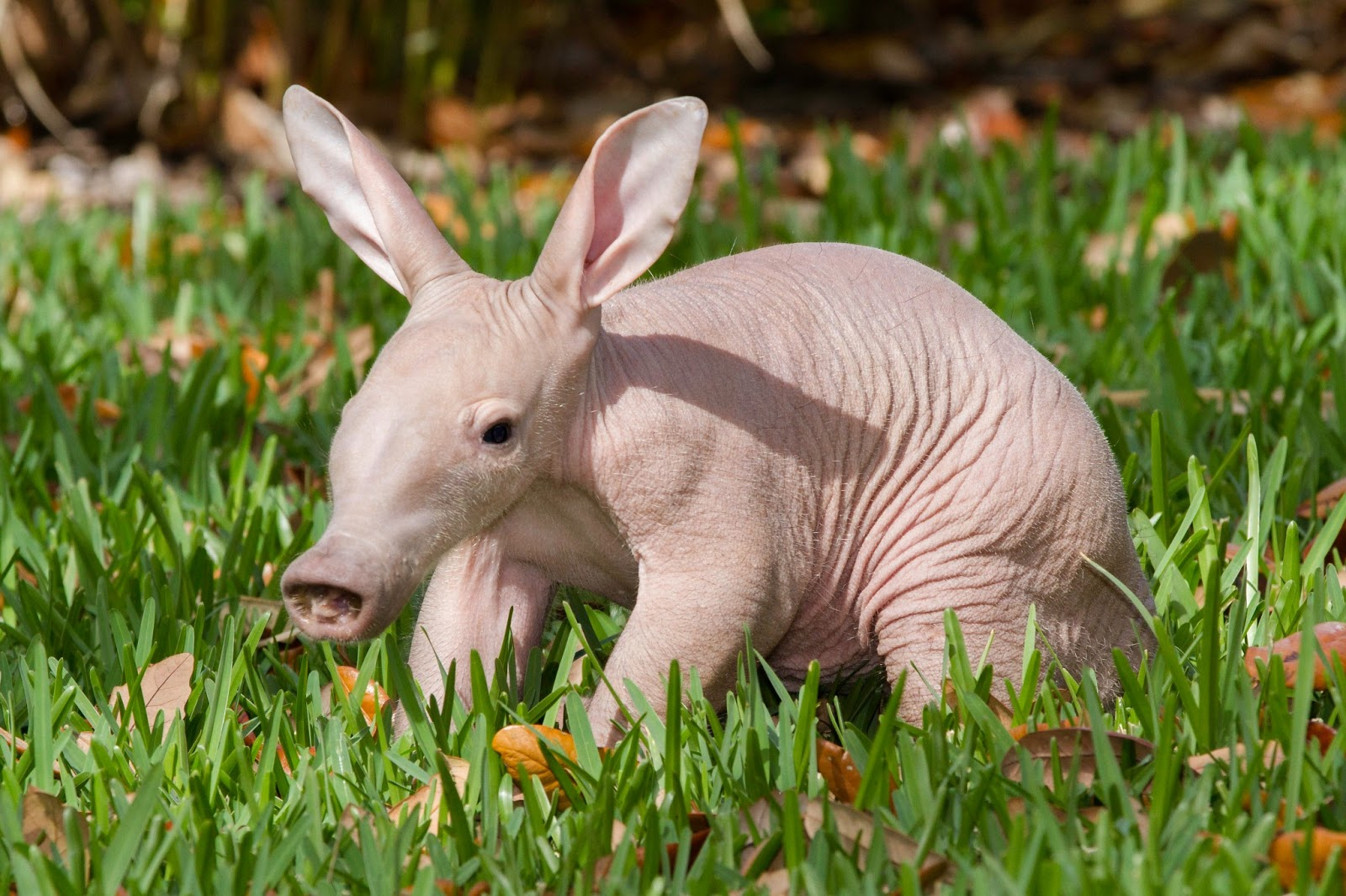 Welcome To Animal Cognizance Spring Brings Baby Animals A