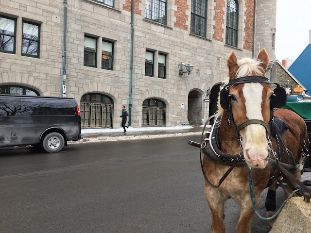 horse outside of Château Frontenac in Québec City, Canada
