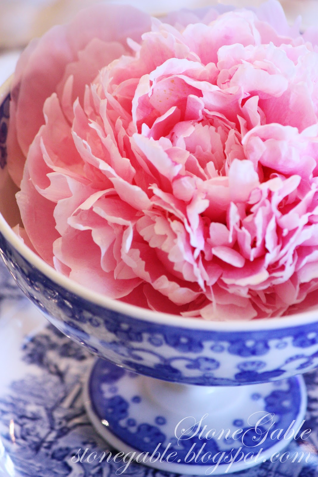 BLUE WILLOW AND PINK PEONIES TABLESCAPE