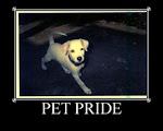 Pet Pride (Sundays)