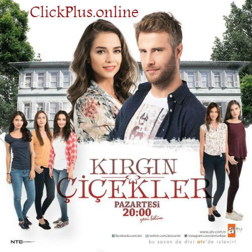 Urmariti acum serialul Petale de Singuratate episodul 85 din 19 Mai 2017 Online Gratis Subtitrat in Premiera