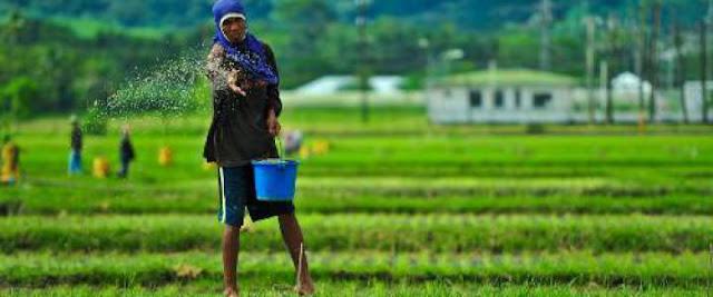 Pertanian Organik di Malaysia