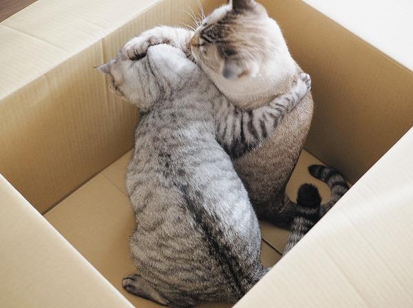 取っ組み合いのケンカを始める猫