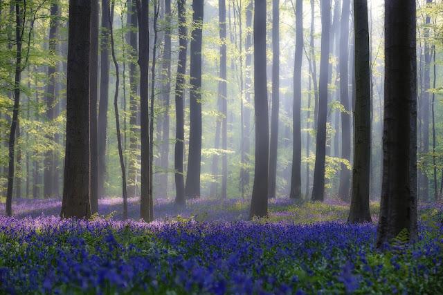 Metsä tapetti Valokuvatapetti Koivutapetti Koivu tapetti metsäaiheinen kuusimetsä maisematapetti