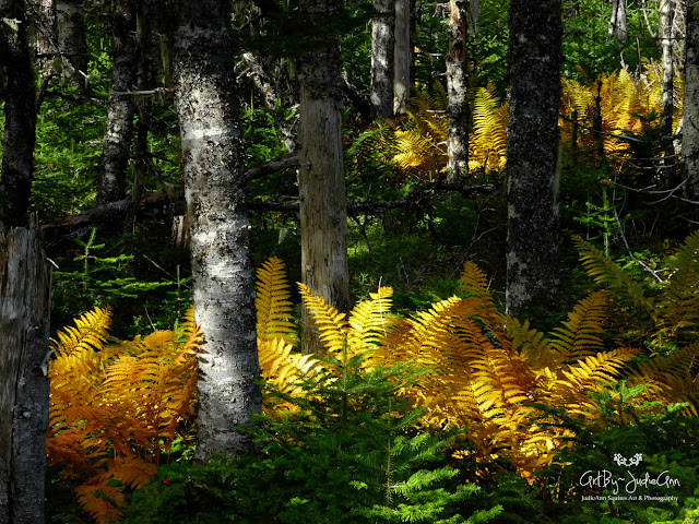 Yellow ferns