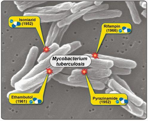 Drug Spectrum For Tuberculosis