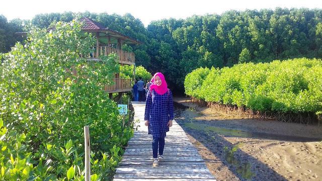 foto hutan mangrove di pantai ayah