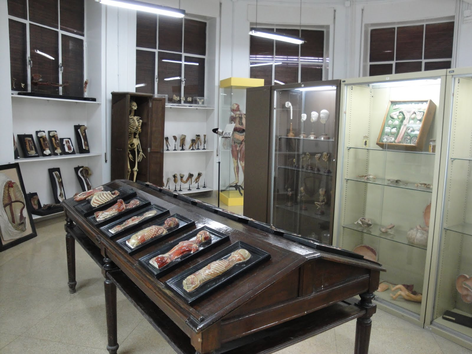 El Museo Anatómico o de Ciencias Biomédicas de Valladolid