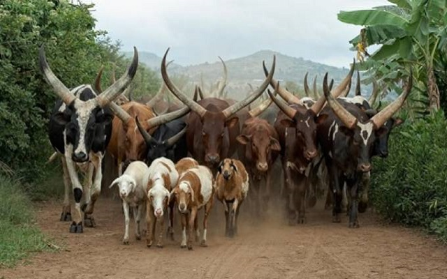 'Expedite action on passing ranching law'